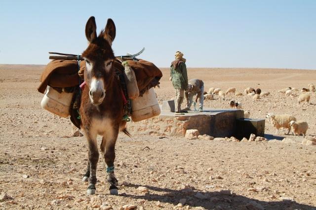 donkey-534906