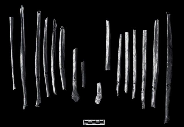 Krapina Cannibalised Bones